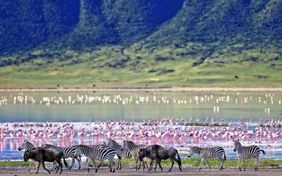 Top safari destinations