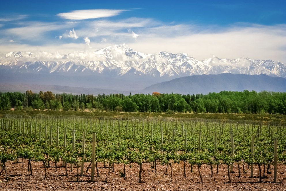 Top wine destinations in the world